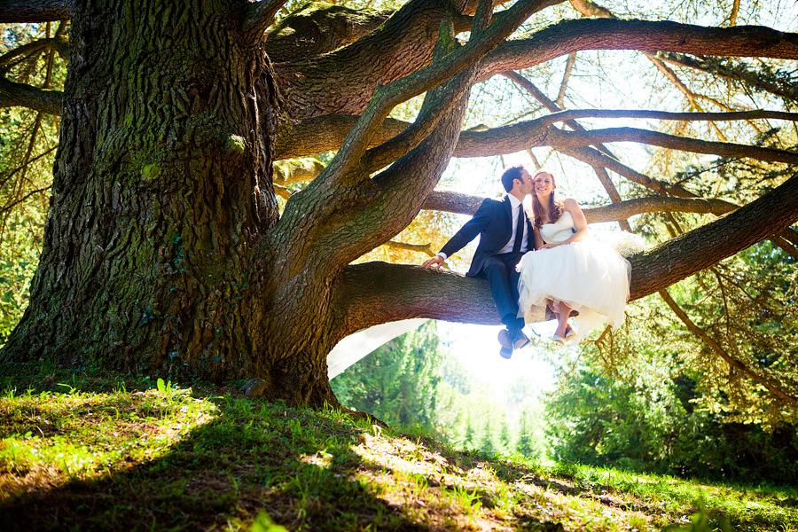 bruidspaar in boom
