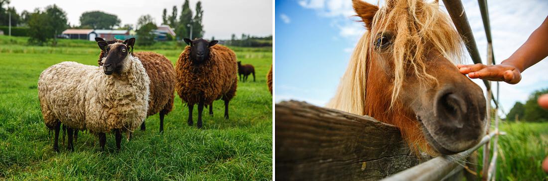063-boerderij-bruiloft-amsterdam